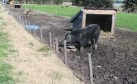 monteverde01
